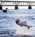 Tarpon fishing at the Bahia Honda bridge